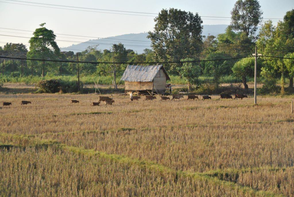 Mehr als drei Viertel der Laoten  leben von der Landwirtschaft
