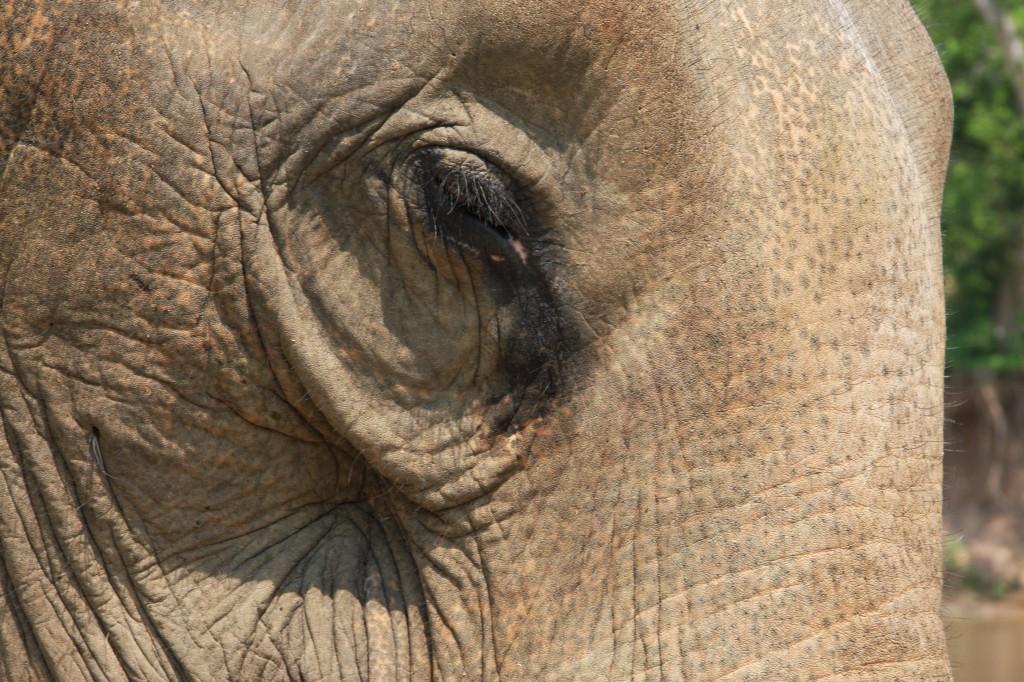 Laos - das Land der Millionen Elefanten