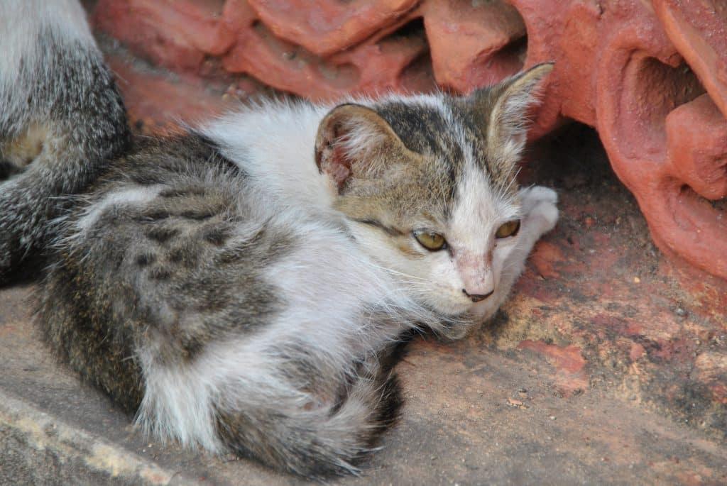 Bei wilden Katzen und Hunden ist in Laos Vorsicht geboten
