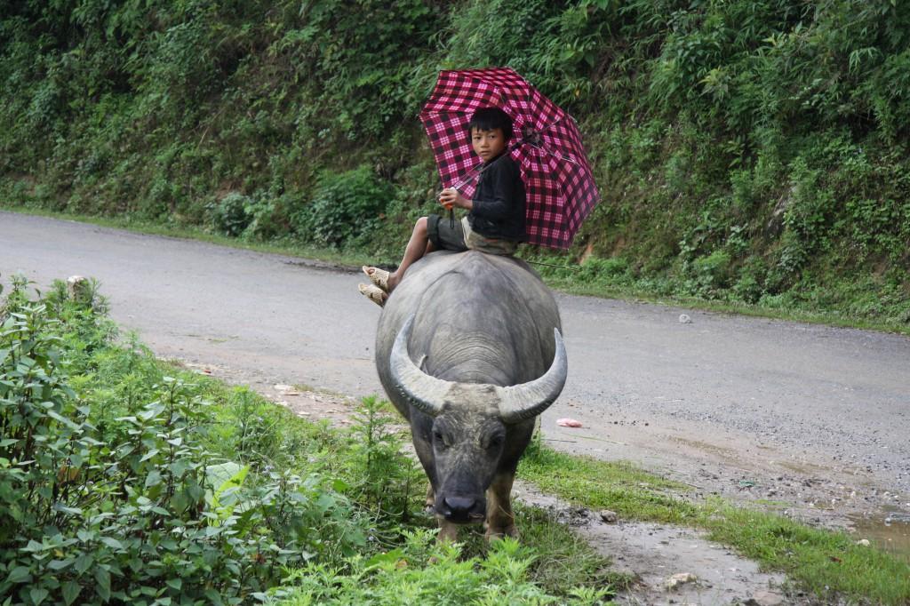 Laos oder Vietnam? Laos punktet mit Natur und Charme