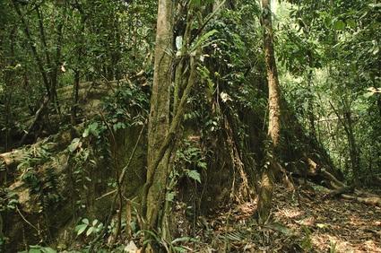 Dschungel in Laos